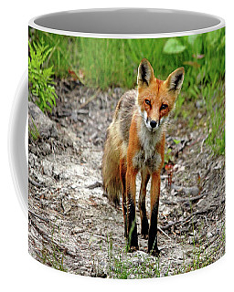 Coffee Mug featuring the photograph Cautious But Curious Red Fox Portrait by Debbie Oppermann