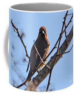 Cedar Wax Wing On The Lookout Coffee Mug