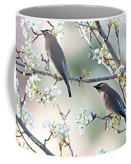 Cedar Wax Wing Pair Coffee Mug