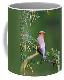 Cedar Waxwing 1 Coffee Mug