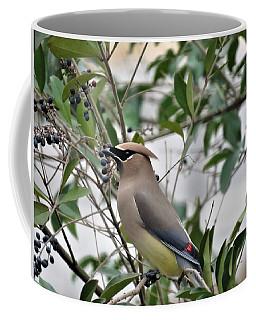 Cedar Waxwing 3 Coffee Mug by Kathy Long