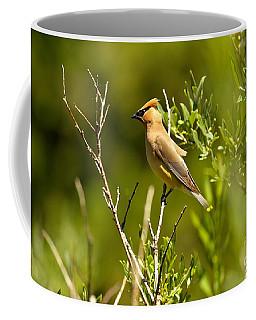 Cedar Waxwing At Glacier Coffee Mug