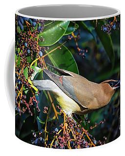 Cedar Waxwing With Berry Coffee Mug by Mitch Shindelbower