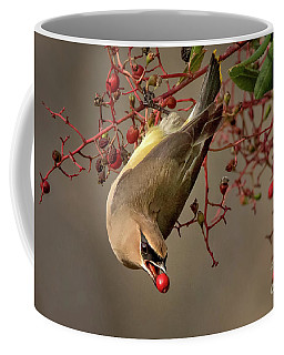 Cedar Waxwing With Toyon Berry Coffee Mug
