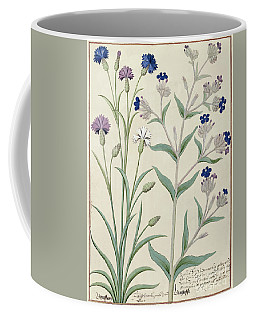Centaurea Montana And Cornflowers Coffee Mug