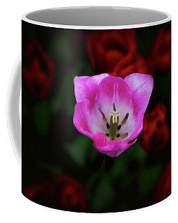 Coffee Mug featuring the photograph Center Of Attention by Darren White