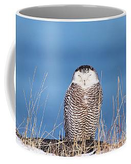 Centered Snowy Owl Coffee Mug