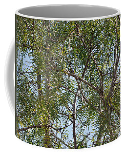Coffee Mug featuring the photograph Central Texas Sky View Through Mesquite Trees by Ray Shrewsberry