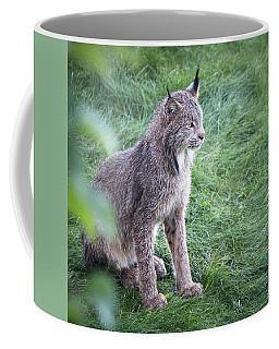 Coffee Mug featuring the photograph Champion Mama Lynx by Tim Newton