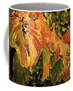 Coffee Mug featuring the photograph Changes by Peggy Hughes