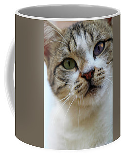 Coffee Mug featuring the photograph Changing Colors by Munir Alawi