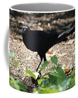 Charleston Wildlife. Black Bird Coffee Mug