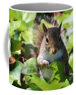 Charleston Wildlife. Squirrel Coffee Mug