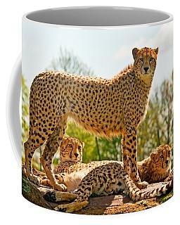 Cheetahs Three Coffee Mug