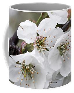Cherry Blosoms Coffee Mug
