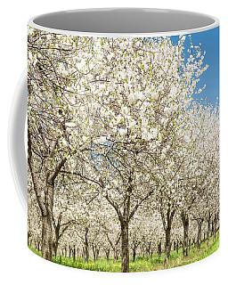 Cherry Blossom Time Coffee Mug