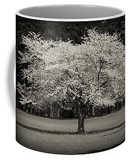 Cherry Blossom Tree - Ocean County Park Coffee Mug