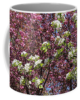 Cherry Tree And Pear Blossoms Coffee Mug
