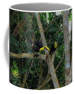 Chestnut-mandibled Toucans Coffee Mug
