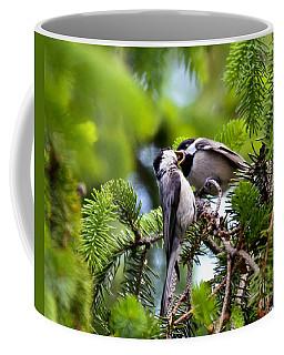 Chickadee Feeding Time Coffee Mug