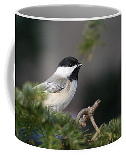 Chickadee In Balsam Tree Coffee Mug