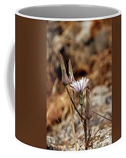 Chicory Flower Bud Closeup Coffee Mug