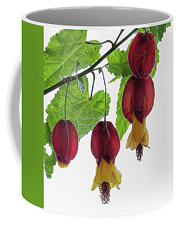 Chinese Lantern 4 Coffee Mug