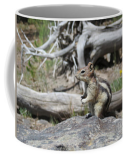 Chipmunk At Yellowstone Coffee Mug by Ausra Huntington nee Paulauskaite