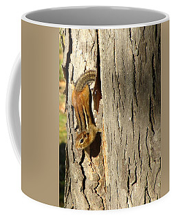 Coffee Mug featuring the photograph Chipmunk In Fall by Rick Morgan