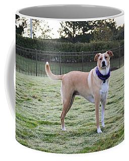 Chloe At The Dog Park Coffee Mug