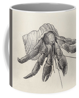 Coffee Mug featuring the drawing Chocolate Hermit Crab by Judith Kunzle