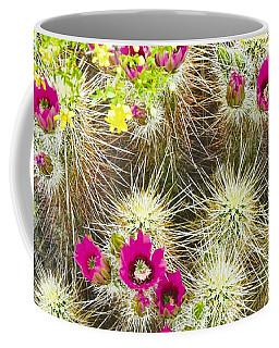 Cholla Cactus Blooms Coffee Mug