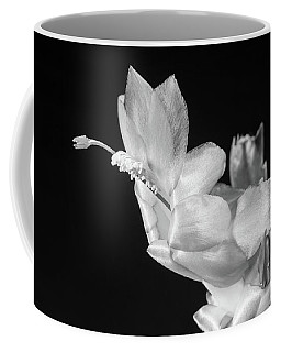 Coffee Mug featuring the photograph Christmas Cactus On Black by Ed Cilley