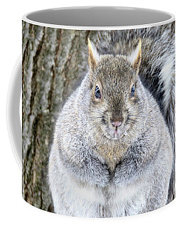Chubby Squirrel Coffee Mug