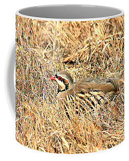 Chuckar Bird Hiding In Grass Coffee Mug by Sheila Brown