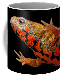 Chuxiong Fire Belly Newt Coffee Mug