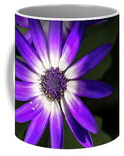 Cineraria Flower Coffee Mug