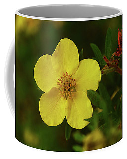 Coffee Mug featuring the photograph Cinquefoil by Sally Sperry