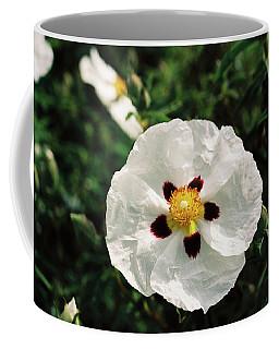 Cistus Cultivar Coffee Mug