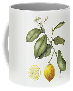 Citrus Bergamot Coffee Mug