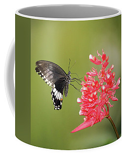 Coffee Mug featuring the photograph Citrus Swallowtail by Grant Glendinning
