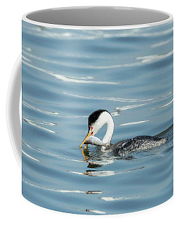 Coffee Mug featuring the photograph Clarks Grebe by Everet Regal