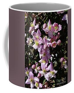Clematis Montana  In Full Bloom Coffee Mug