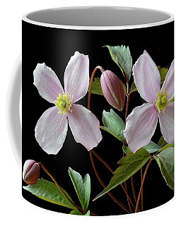 Coffee Mug featuring the photograph Clematis Montana Rubens by Terence Davis
