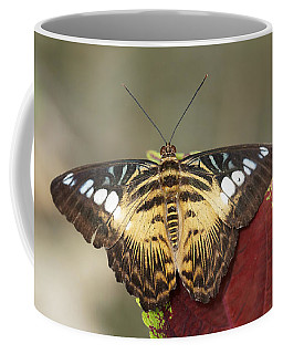 Coffee Mug featuring the photograph Clipper Butterfly by Paul Gulliver