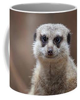 Coffee Mug featuring the photograph Close Up Of A Meerkat Looking At The Camera by PorqueNo Studios