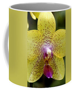Close View Of A Yellow Orchid Blossom Coffee Mug