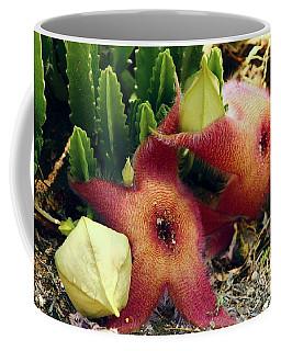 Closeup Of A Desert Starfish Coffee Mug
