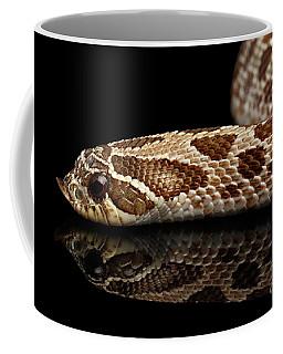 Closeup Western Hognose Snake, Isolated On Black Background Coffee Mug