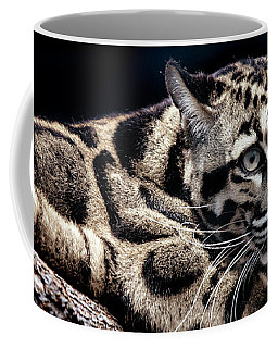 Coffee Mug featuring the photograph Clouded Leopard by David Millenheft